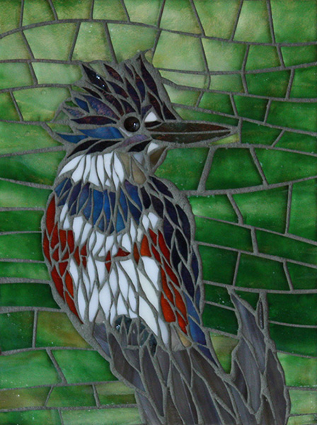 belted-kingfisher-1